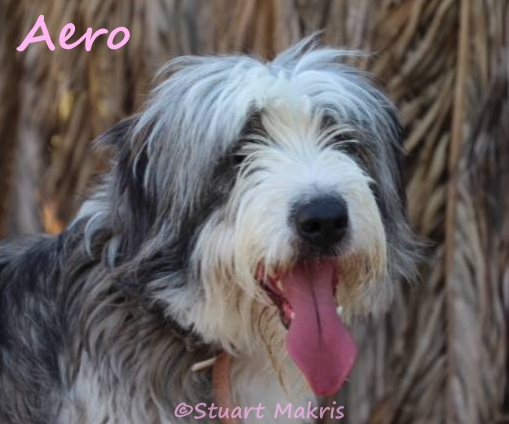Dumped at airport on Greek island, playful pooch 'Aero' seeks forever family