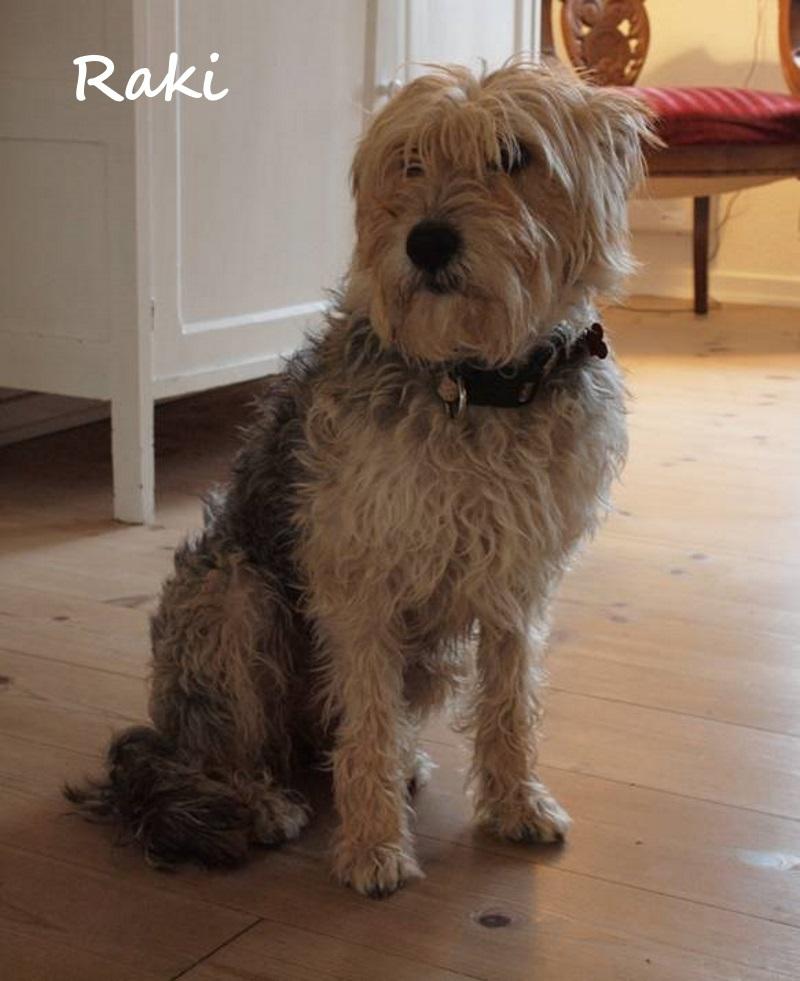 International teamwork: Dumped Greek dog finds true family in Denmark