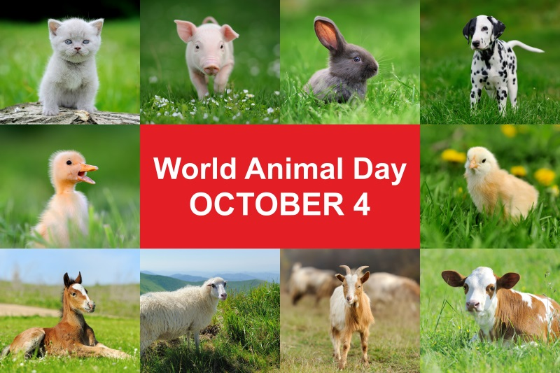 World Animal Day: Created by a writer, honoring the animals' patron saint