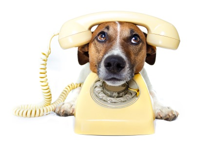 Why does your dog bark when you get on the phone? New study nips at the problem